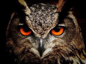 owl-50267_640.jpg